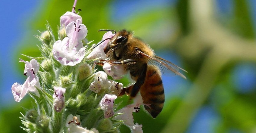 Bees and their nectar