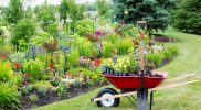 Top Green Landscaping Tips for Beginners