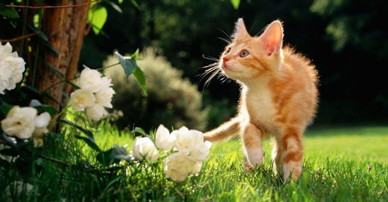 How to Keep Cats Out of Your Garden – Some Natural & High Tech Ways
