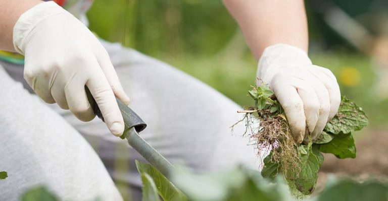 How to Pull off Perfect Chemical-Free Weed Removal