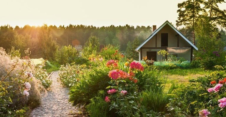 10 Simple and Clever Garden Tips for Beginners