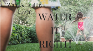 Want A Healthy Lawn? Water It Right