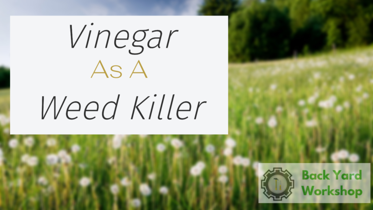 Vinegar As  Weed Killer – Use It The Right Way For Foolproof Weed Control